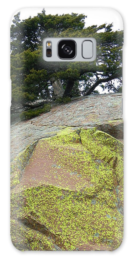 Lichen Galaxy S8 Case featuring the photograph Dusted With Gold by Gale Cochran-Smith