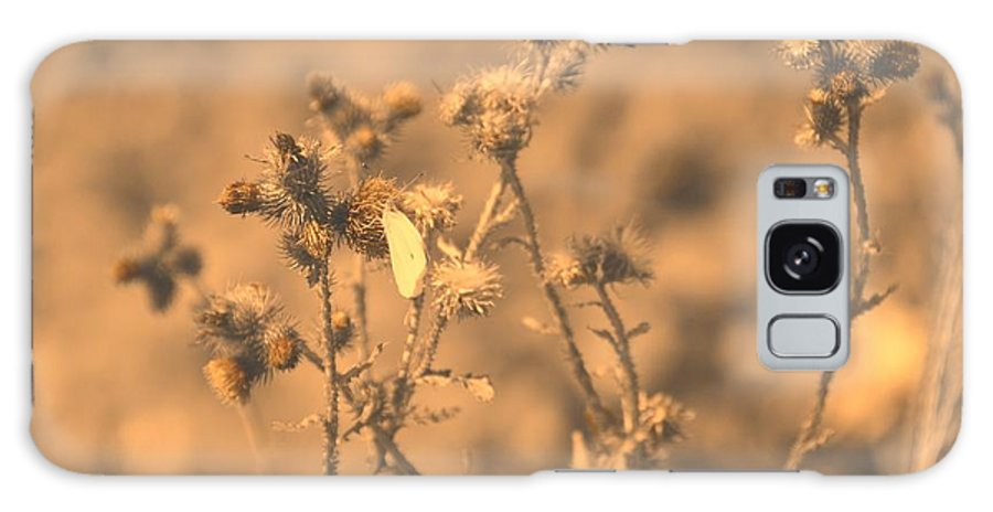 Flowers Galaxy S8 Case featuring the photograph Dusty Desert by Paula Sharlea