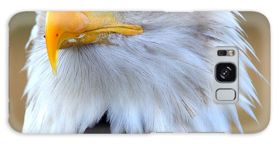 Bald. Eagle. Bird. Raptor Galaxy S8 Case featuring the photograph Eagle Eye by Roger Parker