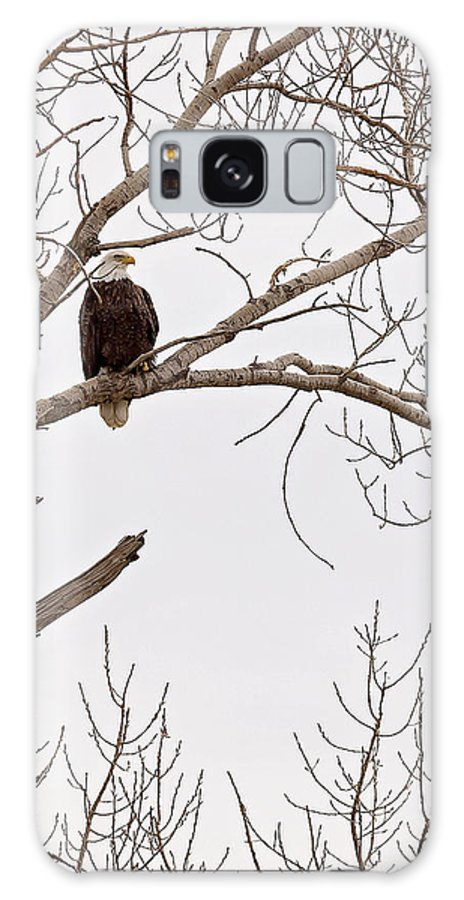 Eagle Galaxy S8 Case featuring the photograph Eagle In Tree by Deb Buchanan
