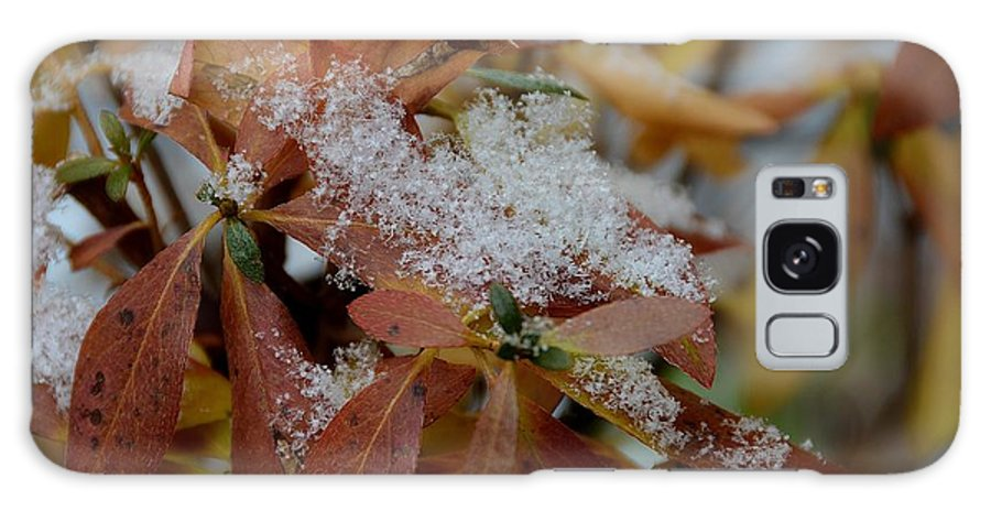 Close Up Of Snow Galaxy S8 Case featuring the photograph Early Snow On Rhododendron by Dave Zuker