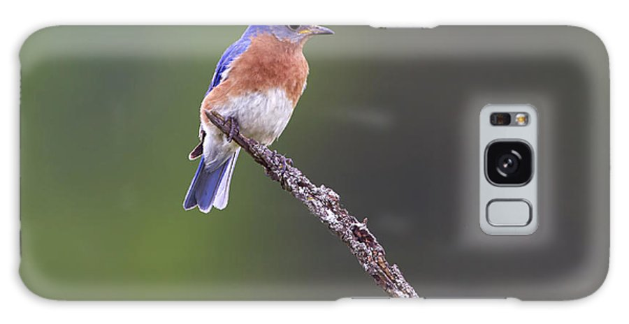 Canada Galaxy S8 Case featuring the photograph Eastern Bluebird by Gary Hall