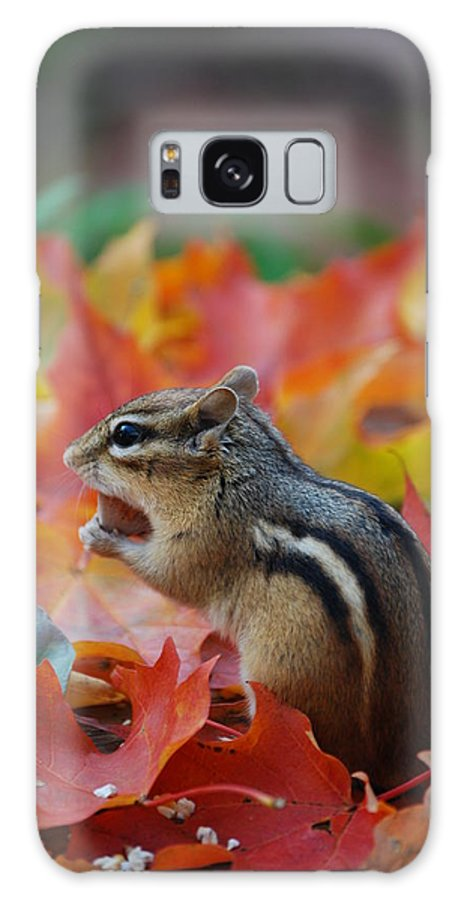 Eastern Chipmunk Galaxy S8 Case featuring the photograph Eastern Chipmunk by Coral Wood