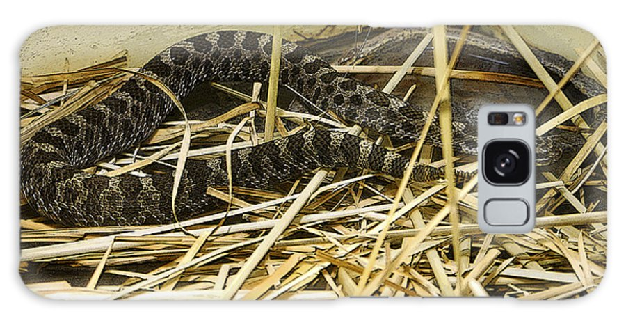 Poster-look Galaxy S8 Case featuring the photograph Eastern Massasauga Rattlesnake Sistrurus Catenatus Poster Look by Sally Rockefeller