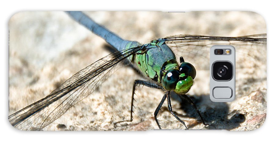Dragonfly Galaxy S8 Case featuring the photograph Eastern Pondhawk Side by Cheryl Baxter