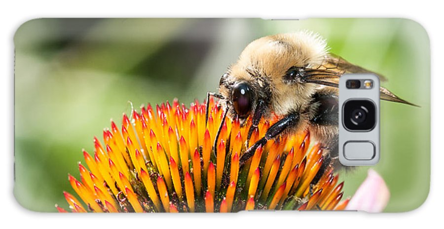 Echinacea With Bumble Bee Galaxy S8 Case featuring the photograph Echinacea Delight by Lara Ellis