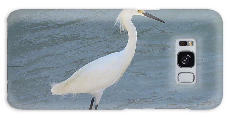 Bird Galaxy S8 Case featuring the photograph Egret In The Ocean by Shar Wolfe