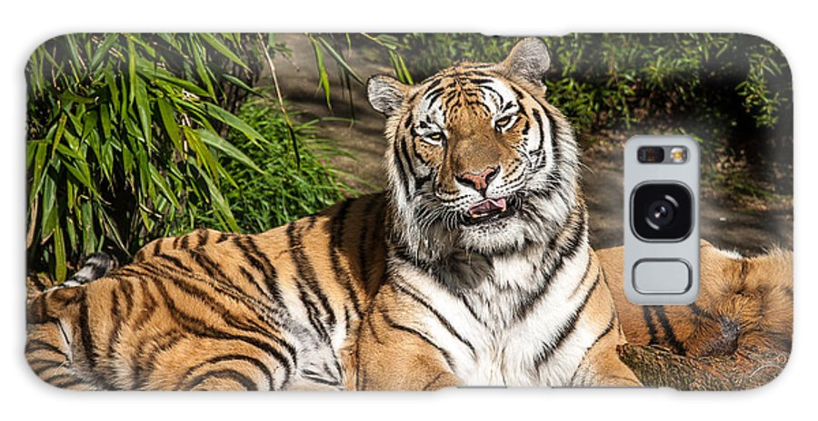 Oregon Zoo Galaxy S8 Case featuring the photograph El Tigre by Craig Pifer