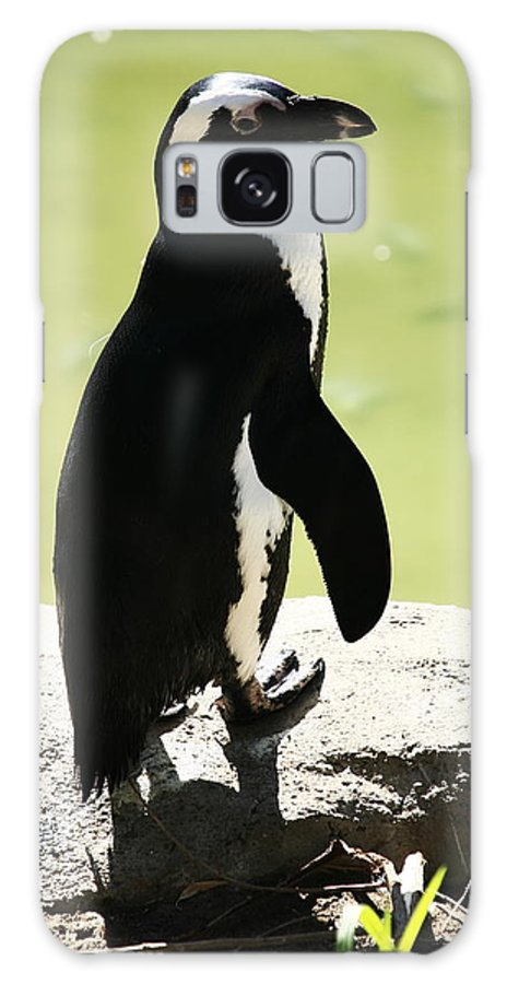 Penguins Galaxy S8 Case featuring the photograph Elegance by Aidan Moran