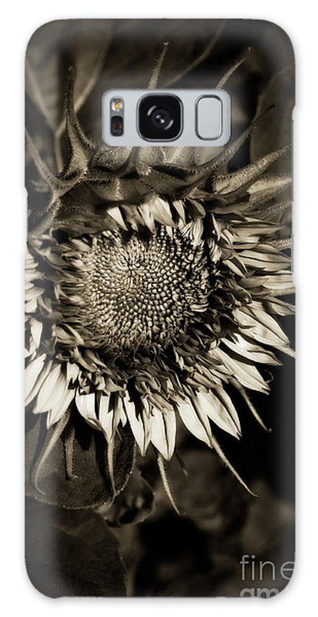 Botanical Galaxy S8 Case featuring the photograph Elegant Sunflower by Venetta Archer