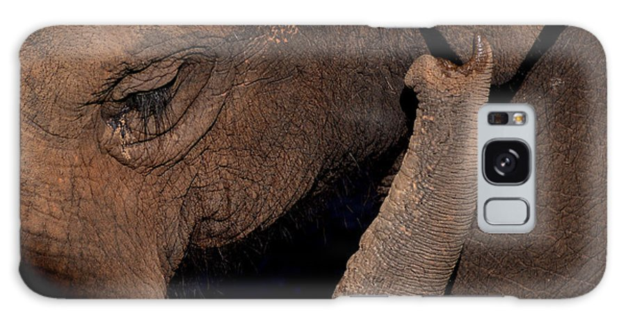 Elephant Galaxy S8 Case featuring the photograph Elephant by Andrea Wright