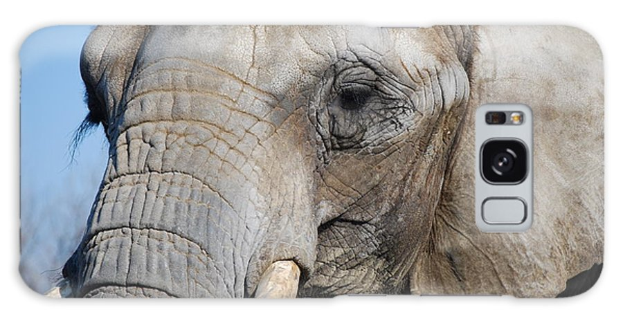 Elephant Galaxy S8 Case featuring the photograph Elephant by Jeffrey Cohen