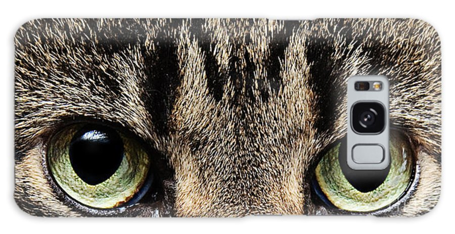 Cat Galaxy S8 Case featuring the photograph Emmy Eyes by Andee Design