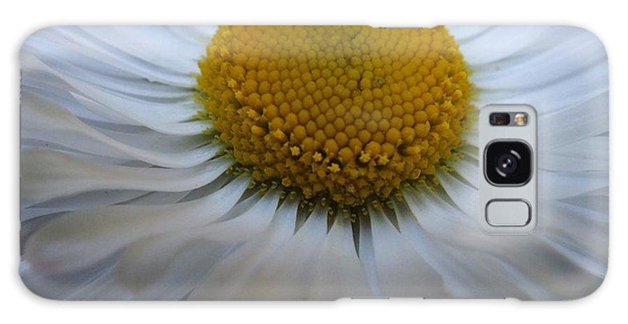 Daisy Galaxy S8 Case featuring the photograph English Daisy by Gene Cyr