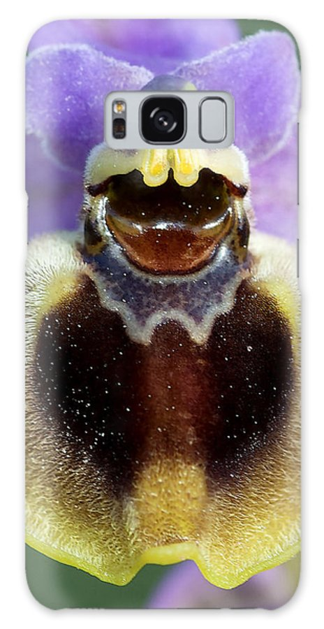 Macro Galaxy S8 Case featuring the photograph Enigma Of Outer World by Pedro Cardona Llambias