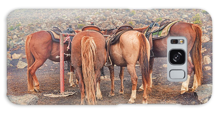 Popular Galaxy S8 Case featuring the photograph Equine Gossip - Haleakala by Paulette B Wright