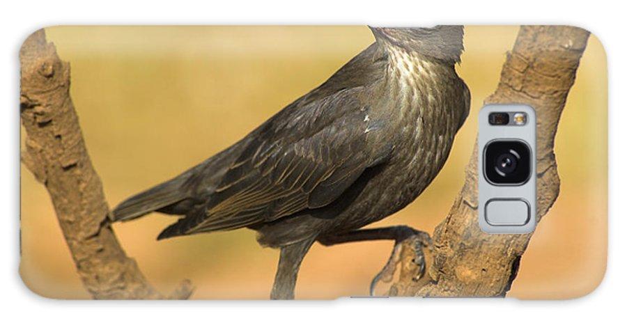 Birds Galaxy S8 Case featuring the photograph Estornino by Guido Montanes Castillo