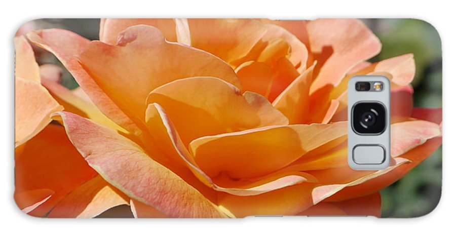 Salmon Colored Rose Galaxy S8 Case featuring the photograph Eternal Flame by Christiane Schulze Art And Photography