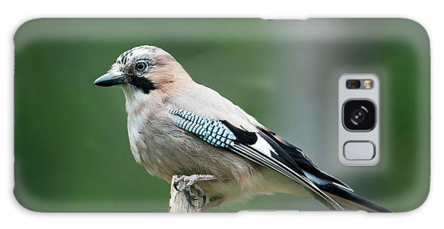 Eurasian Jay Galaxy S8 Case featuring the photograph Eurasian Jay by Dr P. Marazzi/science Photo Library