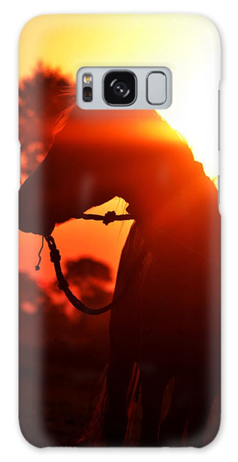Horse Galaxy S8 Case featuring the photograph Eve Horse by Vineet Pal
