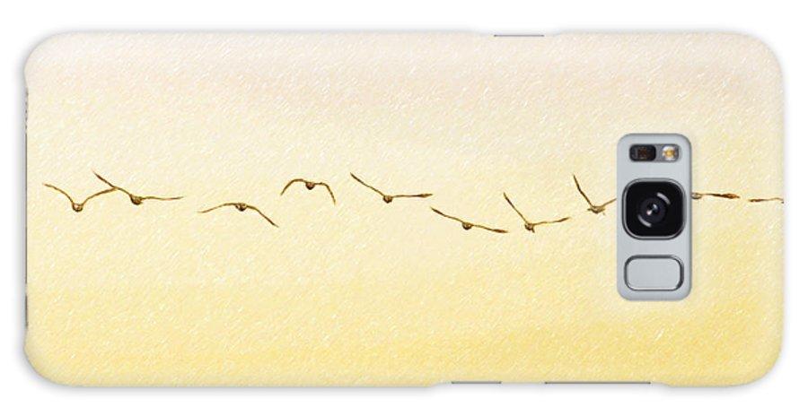 Birds Galaxy S8 Case featuring the photograph Evening Flight by Ramona Murdock