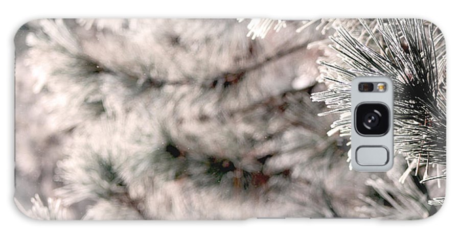 Tree Galaxy S8 Case featuring the photograph Evergreen by Terri JS Molitor