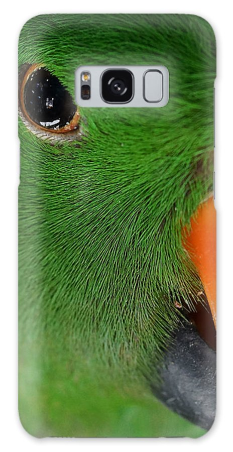 Eclectus Parrot Galaxy S8 Case featuring the photograph Evil Eye by Ernie Echols