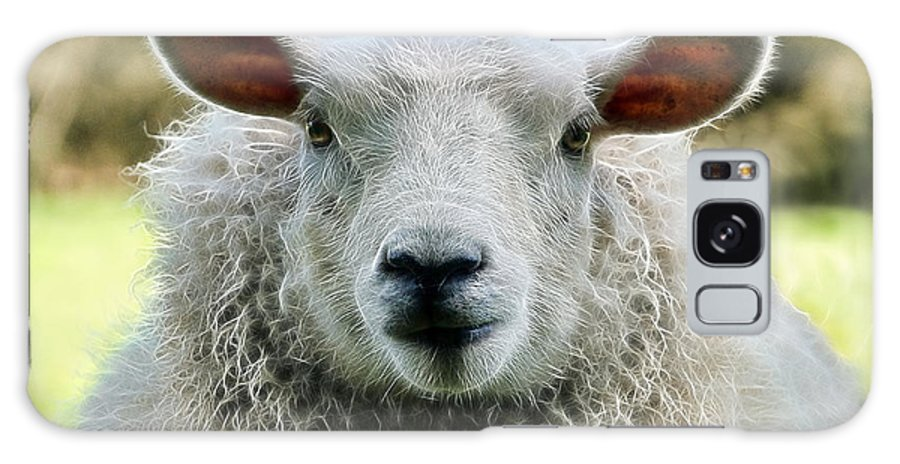 Sheep Galaxy S8 Case featuring the photograph Ewe's Just Fluffy by Susie Peek