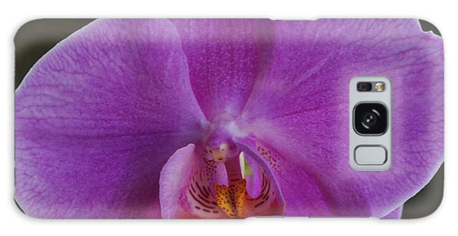 Galaxy S8 Case featuring the photograph Exotic Orchid 2 by Jim Hogg