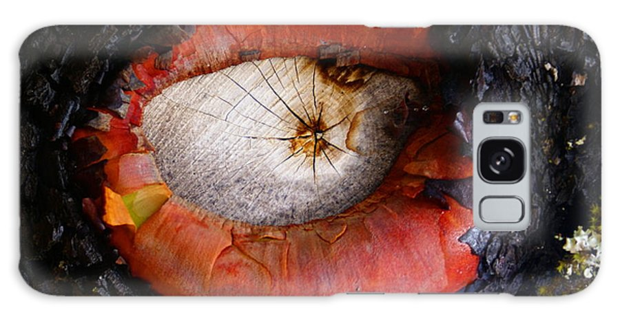 Madrone Galaxy S8 Case featuring the photograph Eye Of Madrone by Ben Upham III