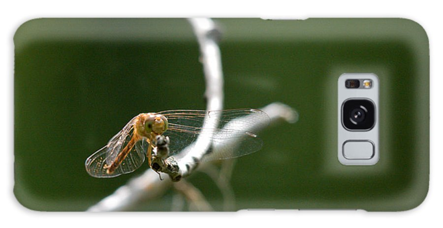 Common Red Darter Galaxy S8 Case featuring the photograph Eye To Eye by Cheryl Baxter