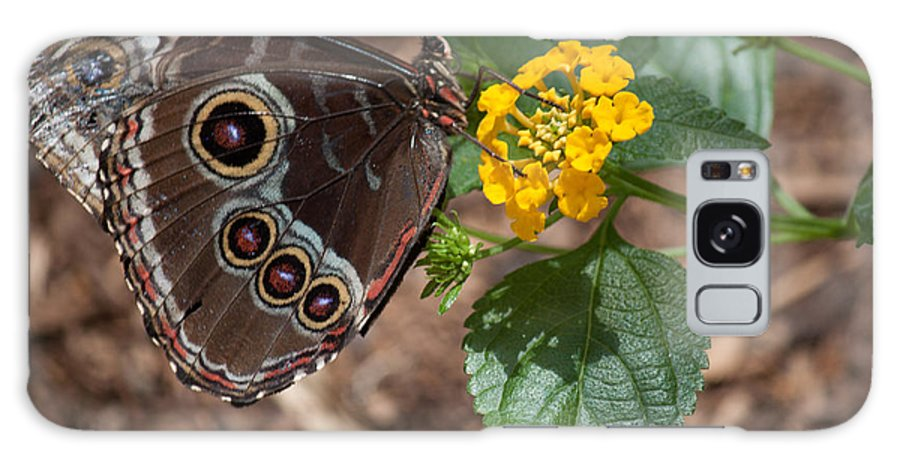 Butterfly Galaxy S8 Case featuring the photograph Eyefull by Ronald Lake