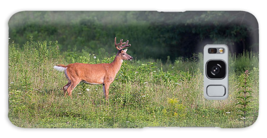 White Tail Deer Galaxy S8 Case featuring the photograph Eyeing A Mate by Dale Kincaid