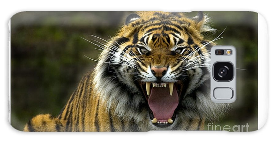 Tiger Galaxy S8 Case featuring the photograph Eyes Of The Tiger by Mike Dawson