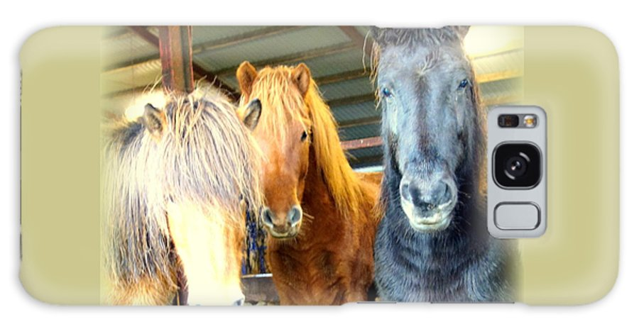 Horse Galaxy S8 Case featuring the photograph The Furry Trio Facing Me Again by Hilde Widerberg