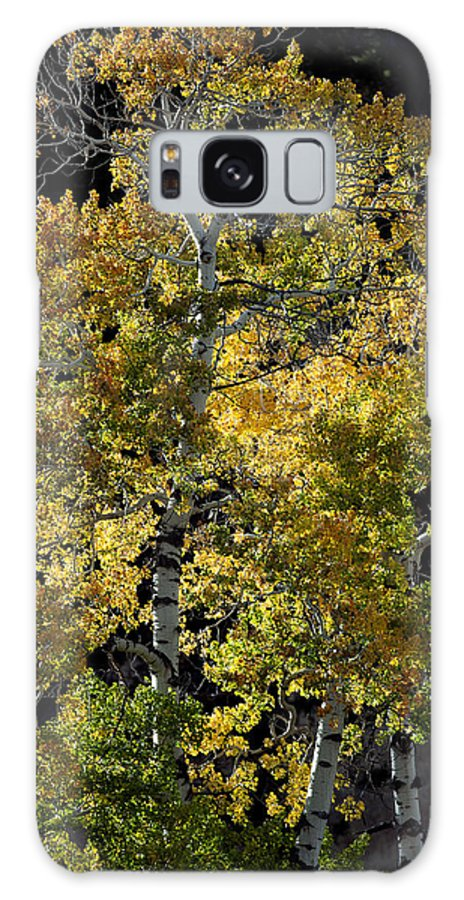 Fall Galaxy S8 Case featuring the photograph Fall Aspen by Gary Langley