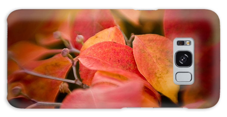 Color Galaxy S8 Case featuring the photograph Fall Colors 6675 by Timothy Bischoff