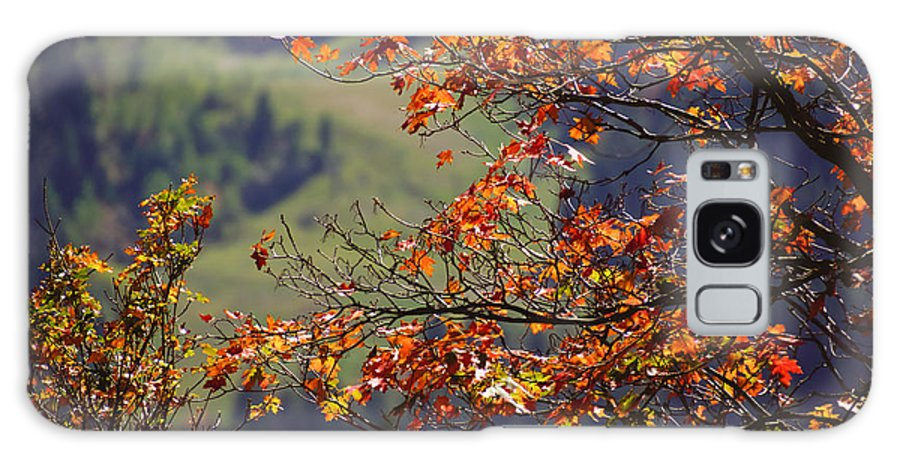 Fall Galaxy S8 Case featuring the photograph Fall Colors by Gloria Pasko