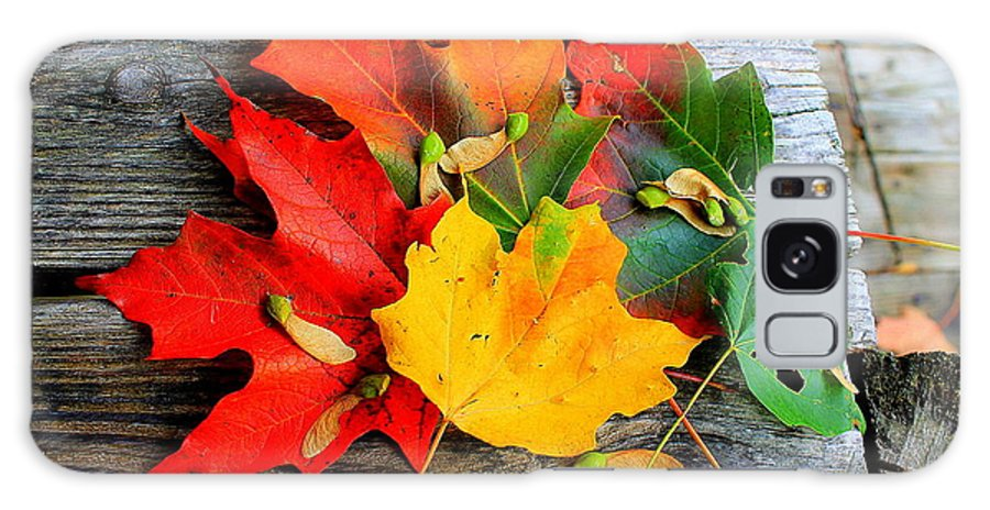 Fall Leaves Nj Galaxy S8 Case featuring the photograph Fall Colors by Karl Monkemeyer