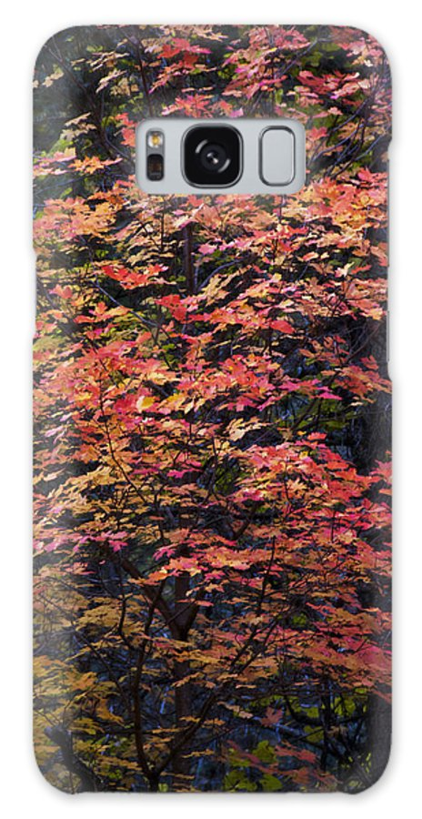 Fall Galaxy S8 Case featuring the photograph Fall Colors by Saija Lehtonen