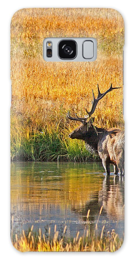 Elk Galaxy S8 Case featuring the photograph Fall Elk Reflection by Todd Roach