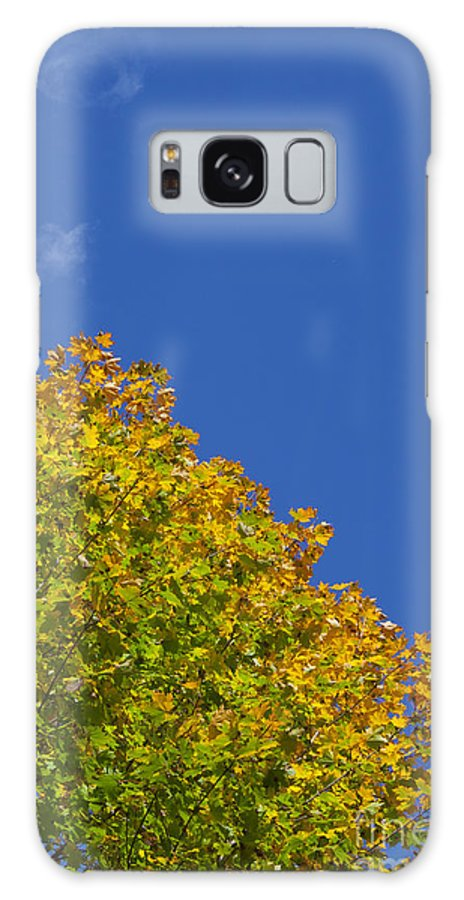 Day Galaxy S8 Case featuring the photograph Fall Foliage by Jonathan Welch