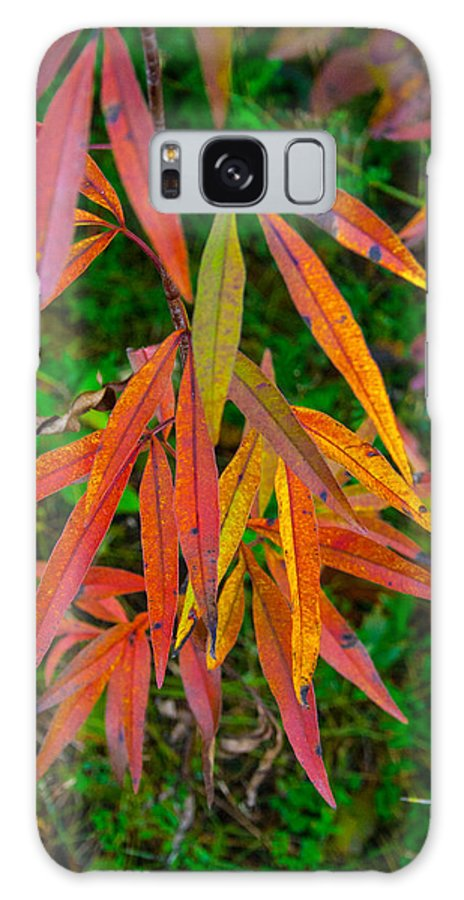 Autumn Galaxy S8 Case featuring the photograph Fall Leaves by Robert Storost
