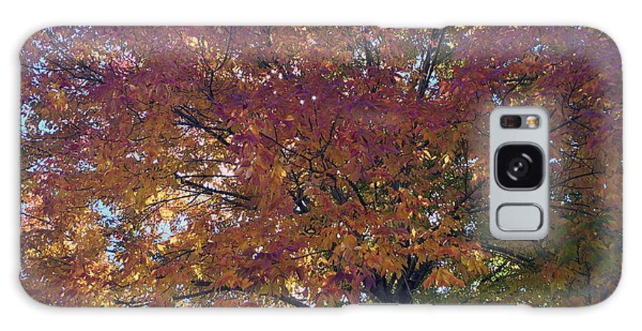 Fall Galaxy S8 Case featuring the photograph Fall Trees by Tyler Otte