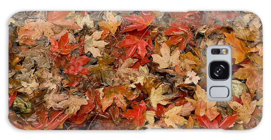Lost Maples State Natural Area Galaxy S8 Case featuring the photograph Fallen Leaves by Bob Phillips