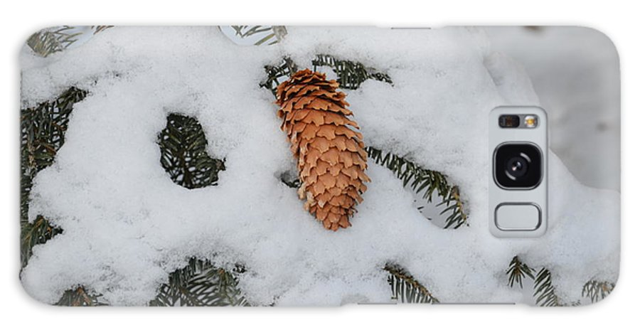 Christmas Galaxy S8 Case featuring the photograph Fallen Pine Cone by William Hallett