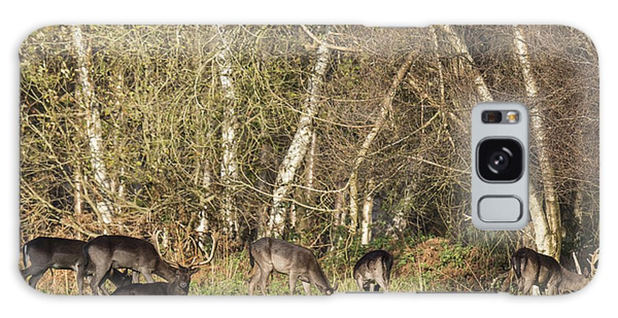Fallow Deer British Wildlife Grass Trees Resting Stag Galaxy S8 Case featuring the photograph Fallow Deer by John Richardson