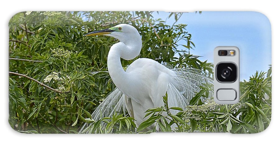 Egret Galaxy S8 Case featuring the photograph Fancy by Carol Bradley