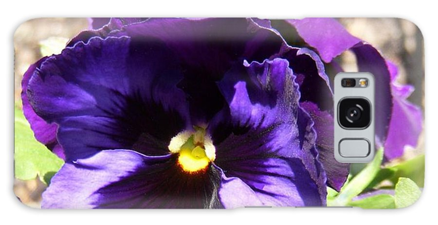 Purple Pansy Galaxy S8 Case featuring the photograph Fancy Schmancy by Terri Waselchuk