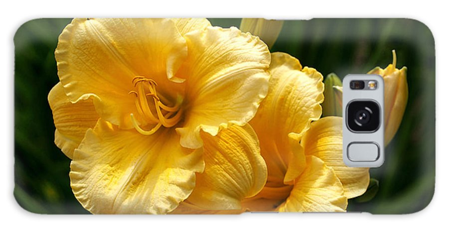 Lilies Galaxy S8 Case featuring the photograph Fancy Yellow Daylilies by Rona Black